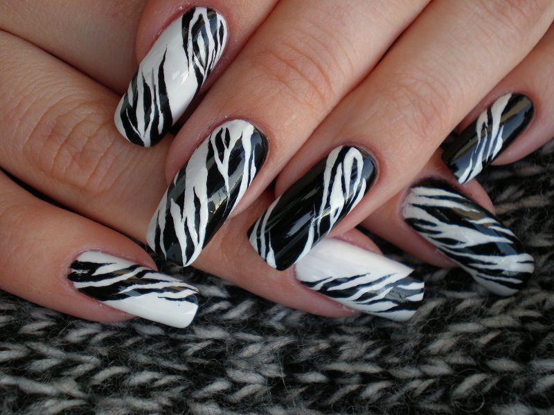 kb zebrato bn